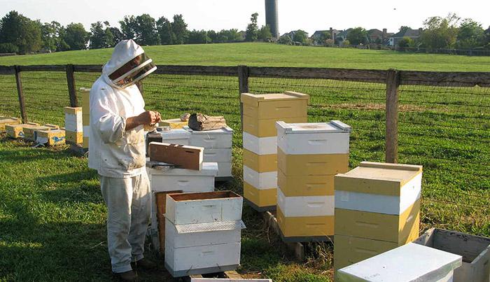 استفاده از اسید اگزالیک برای درمان کنه وارووا در پرورش زنبور عسل